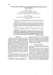 On the taxonomy of Monilia roreri, an important pathogen of ... - CBS