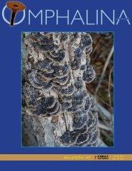 My Favourite Mushroom: Fomitopsis pinicola