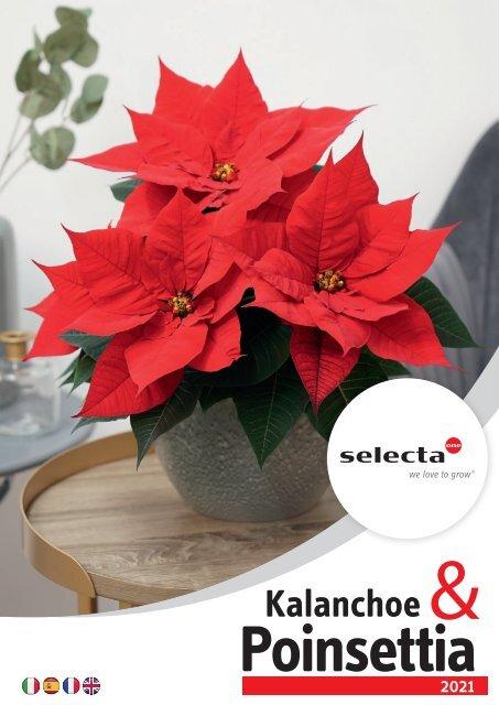 selecta Kalanchoe und Poinsettia 2021 SE IT