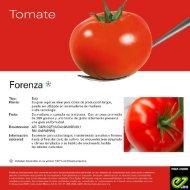 Forenza Tomate vFT 2021 - EZ-03
