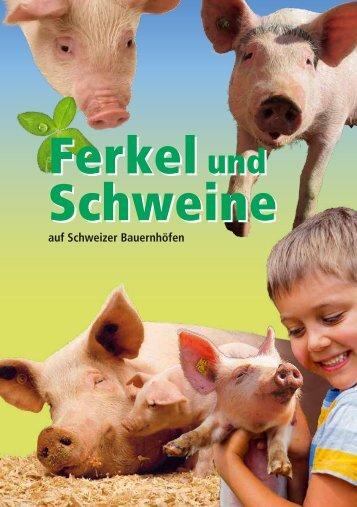 Ferkel und Schweine