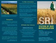SRI-Rice brochure - The System of Rice Intensification - Cornell ...