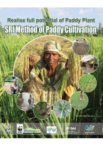 SRI Method of Paddy Cultivation - WASSAN