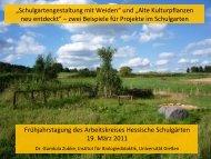 Salix viminalis - Naturschutz-Akademie Hessen