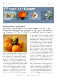 Pflanze der Saison - kraeuterwissen.ch