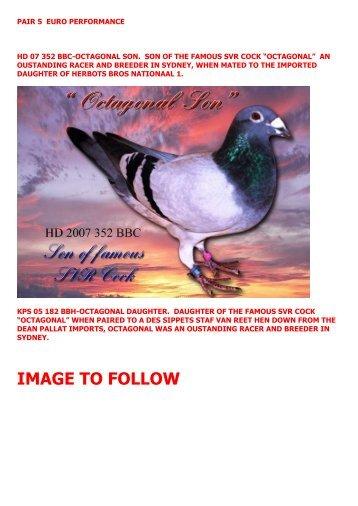 PAIR 5 EURO PERFORMANCE - pigeon sales