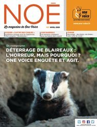 Noé 97