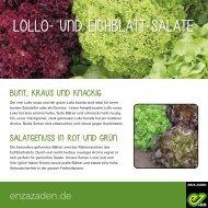 Lollo-und Eichblattsalate für des Gemusegartens