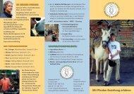 Mit Pferden Beziehung erfahren - systemische-reittherapie.de
