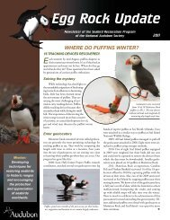 Egg Rock Update - Project Puffin - National Audubon Society