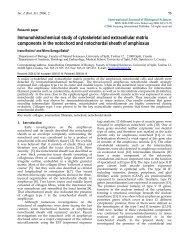 Immunohistochemical study of cytoskeletal and extracellular matrix ...