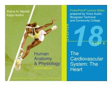 The Cardiovascular System: The Heart - TeacherWeb