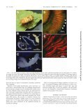 Primary Gut Symbiont and Secondary, Sodalis-Allied Symbiont of ... - Page 3