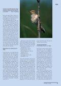 Unbekanntes Weißrussland: Wasservögel und Karpfen - Der Falke - Seite 4