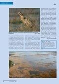 Unbekanntes Weißrussland: Wasservögel und Karpfen - Der Falke - Seite 7