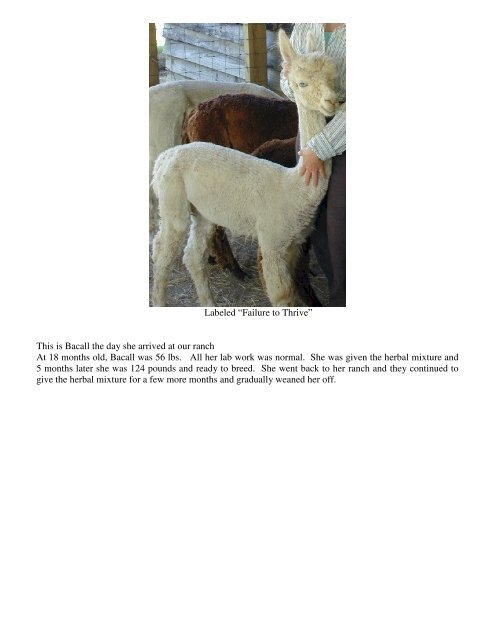 Natural Herbal Remedies for Alpacas - Alpacas ALL Naturale