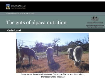 The guts of alpaca nutrition - The UWA Institute of Agriculture - The ...
