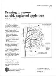 Pruning to Restore an Old, Neglected Apple Tree - ScholarsArchive ...