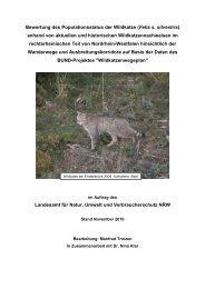 Bewertung des Populationsstatus der Wildkatze (Felis s ... - BUND Nrw