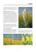 anbaugebiet 1 - Pioneer - Seite 7