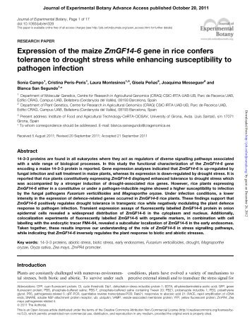 Expression of the maize ZmGF14-6 gene in rice confers tolerance to ...
