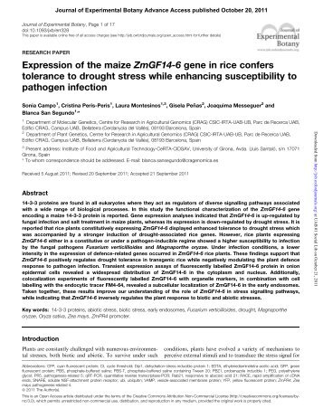 Expression of the maize ZmGF14-6 gene in rice confers ... - CRAG