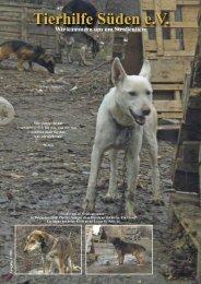 Wir alle sind Straßenhunde, die hier in diesem ... - Tierhilfe Süden