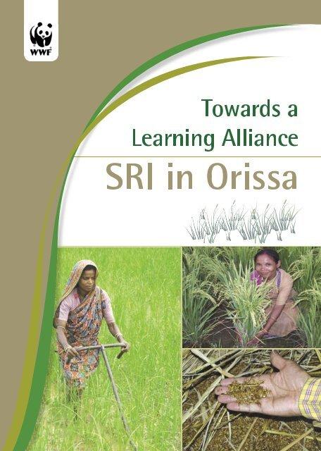 SRI in Orissa - Cornell International Institute for Food, Agriculture ...