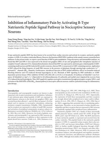 Inhibition of Inflammatory Pain by Activating B-Type Natriuretic ...