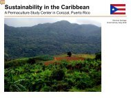 Sustainability in the Caribbean - Think Green Tank
