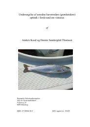 154-05 Undersøgelse af umodne havørreders optræk i ... - DTU Aqua