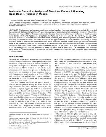 Molecular Dynamics Analysis of Structural Factors Influencing Back ...