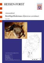 Artensteckbrief Breitflügelfledermaus Eptesicus serotinus in Hessen