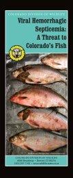 Viral Hemorrhagic Septicemia Brochure - Colorado Division of Wildlife