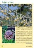 Der pflanzliche Arzneischatz - bei PHYTO Therapie - Seite 6