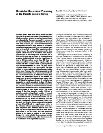 Distributed Hierarchical Processing in the Primate Cerebral Cortex