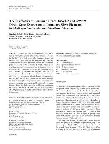 The Promoters of Forisome Genes MtSEO2 and ... - Writescience.com