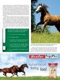 Genau so ergeht es auch den Pferden, die des Boxen - iWEST - Seite 4