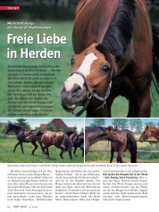 Freie Liebe in Herden Freie Liebe in Herden - Focus-on-Horses