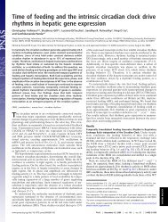 Time of feeding and the intrinsic circadian clock drive rhythms in ...