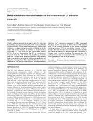 Shedding of L1 adhesion molecule - Journal of Cell Science - The ...