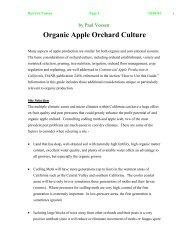 Organic Apple Orchard Culture