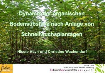 Dynamik der organischen Bodensubstanz nach Anlage von ...