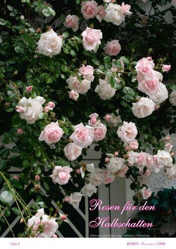 Rosen für den Halbschatten - Rosenhof- Schultheis