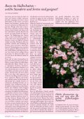 Rosen für den Halbschatten - Rosenhof- Schultheis - Seite 2