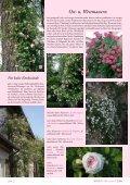 Rosen für den Halbschatten - Rosenhof- Schultheis - Seite 3