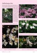 Rosen für den Halbschatten - Rosenhof- Schultheis - Seite 4