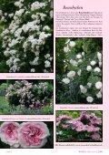 Rosen für den Halbschatten - Rosenhof- Schultheis - Seite 5