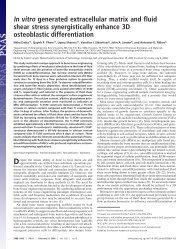 In vitro generated extracellular matrix and fluid shear stress ...