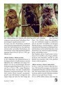 Hybridisierung zwischen verschiedenen Eulenarten - AG Eulenschutz - Seite 5